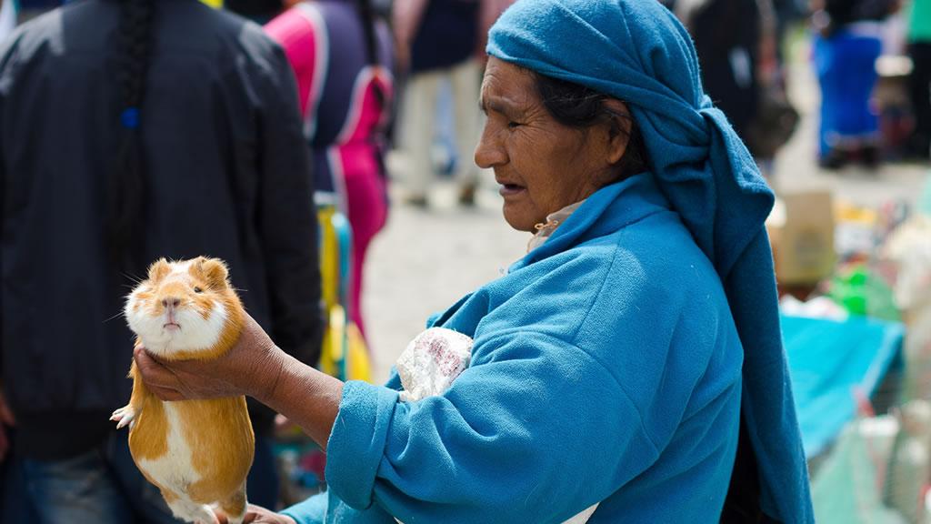 Женщина на рынке продает морскую свинку. Эквадор